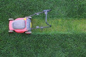 Lawn maintenance auburn